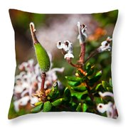 Spider Flower Seed Pod Throw Pillow