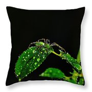 Spider In The Shower Throw Pillow