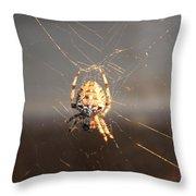 Spider In Wait Throw Pillow
