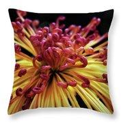 Spider Chrysanthemum Throw Pillow