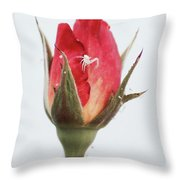 Spider On A Rose Throw Pillow
