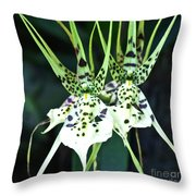 Spider Orchid Brassia Throw Pillow