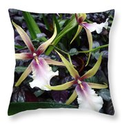 Spider Orchids Throw Pillow