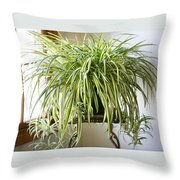 Spider Plant Throw Pillow