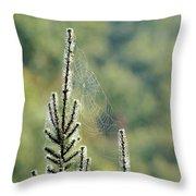 Spider Silk Throw Pillow