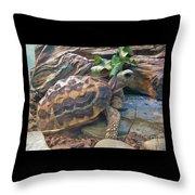 Spider Tortoise       Zoo    Indiana Throw Pillow