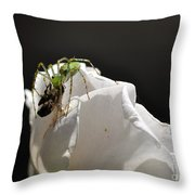 Spider Vs Bee On Rose Throw Pillow