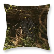 Spiders Web In Sunlight In Peters Canyon Throw Pillow