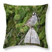 Spiffy Sparrow Throw Pillow