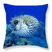 Spiky Exterior Throw Pillow