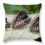 Spiky Beetle Cases Throw Pillow