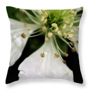 Spindly Stamen Throw Pillow