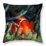 Spinecheek Anemonefish, Great Barrier Reef Throw Pillow
