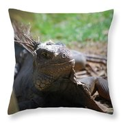 Spines Along The Back Of An Iguana In The Tropics Throw Pillow