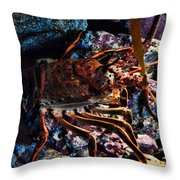 Spiney California Lobster Throw Pillow