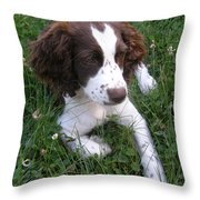 Spinger Spaniel Pup Throw Pillow