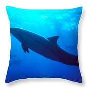 Spinner Dolphin Throw Pillow