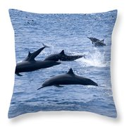 Spinner Dolphins Throw Pillow
