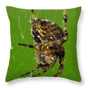 Spinning A Web Throw Pillow