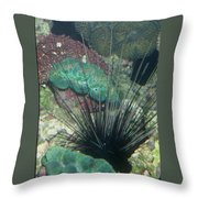 Spiny Throw Pillow