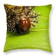 Spiny Larvae Throw Pillow