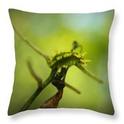 Spiny Oak Slug Moth 2 Throw Pillow