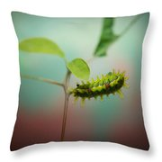 Spiny Oak Slug Moth 3 Throw Pillow