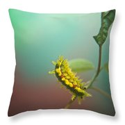Spiny Oak Slug Moth 5 Throw Pillow