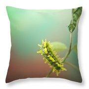 Spiny Oak Slug Moth 6 Throw Pillow