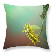 Spiny Oak Slug Moth 7 Throw Pillow