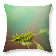 Spiny Oak Slug Moth 8 Throw Pillow