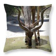 Spiral Horned Antelope Drinking Throw Pillow