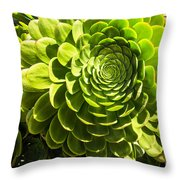 Spiral Succulant Throw Pillow