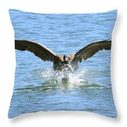 Splash Landing Throw Pillow