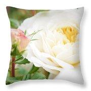 Splended Roses Throw Pillow