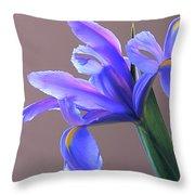 Splendid Iris Throw Pillow