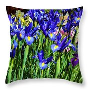 Vivid Blue Iris Flowers Throw Pillow