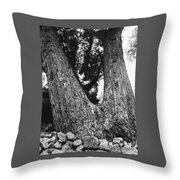 Splitting Tree Throw Pillow