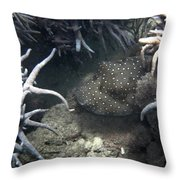 Spot Coloured Fish Throw Pillow