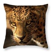 Spot Light Throw Pillow