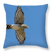 Spot-winged Falconet  In Flight Throw Pillow