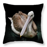 Spotlight On A Pink-backed Pelican Throw Pillow
