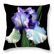 Spotlight On 'freedom Song' Bearded Iris Throw Pillow