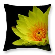 Spotlight On Lily Throw Pillow