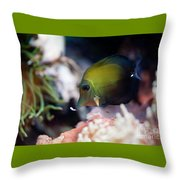 Spotted Aquarium One Fish Throw Pillow