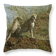 Spotted Cats Throw Pillow