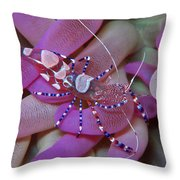 Spotted Cleaner Shrimp On Anemone Throw Pillow