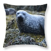 Spotted Coat Of A Harbor Seal Throw Pillow