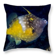 Spotted Filefish Throw Pillow