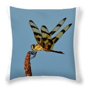 Spotted Hunter Throw Pillow